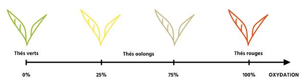 Schéma famille de thé et oxydation