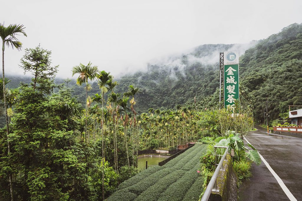 Plantation de thé à Taïwan