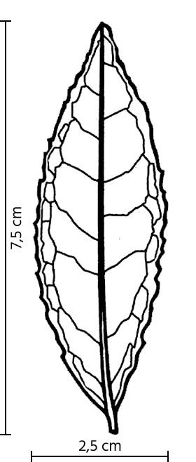 Feuille du cultivar Tie Guan Yin